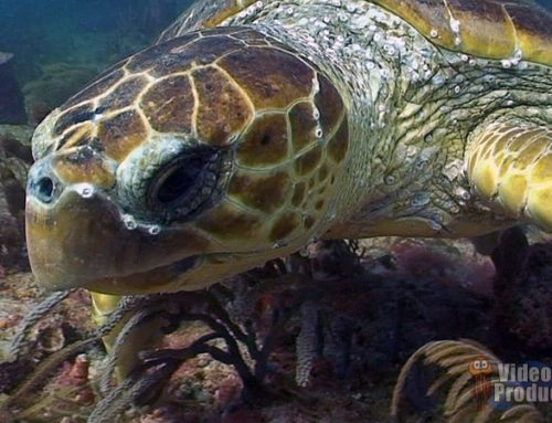 Sea Turtle Close Encounter