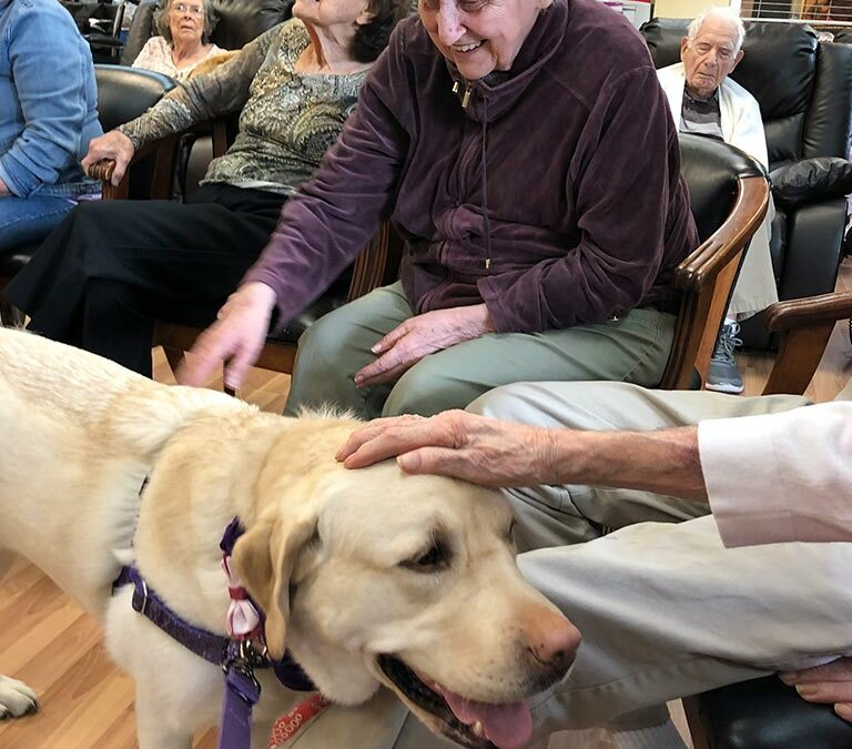 Canine Assisted Therapy Recruitment Video