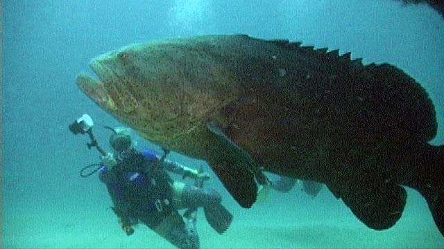 force-e grouper dive